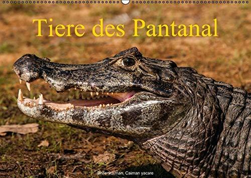 Tiere des Pantanal (PosterbuchDIN A2 quer): Jürgen Wöhlke