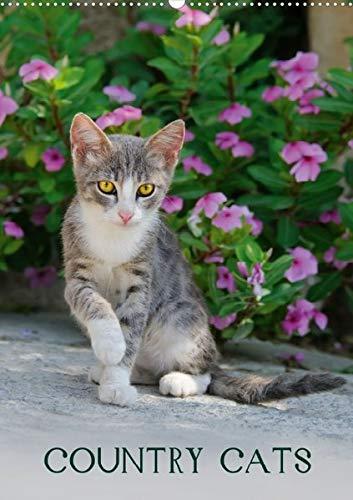 9783660106619: COUNTRY CATS  (Posterbuch DIN A2 hoch): Bezaubernde Katzen fotografiert auf dem Land und in Bauerngärten. Posterbuch  Posterbuch, 14 Seiten