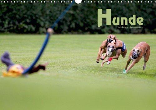 9783660178210: Hunde - Author: Brandmeier Wolfgang