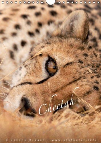 9783660214826: Cheetahs - Geparde (Wandkalender 2014 DIN A4 hoch): Traumhafte Aufnahmen vom schnellsten Säugetier  Tier auf unserem Planeten (Monatskalender, 14 Seiten)