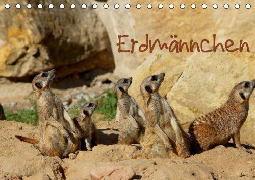 9783660280876: Erdmännchen - Author: Hultsch Heike