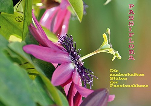 9783660308259: Passiflora (Tischaufsteller DIN A5 quer)