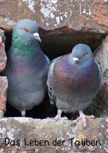 9783660309188: Das Leben der Tauben (Wandkalender 2014 DIN A3 hoch): Das Leben der Tauben A3 hoch