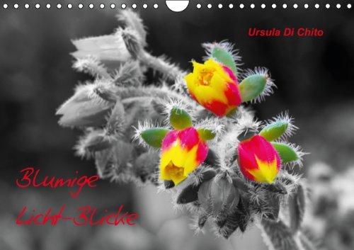 9783660332872: Blumige Licht-Blicke (Wandkalender immerw�hrend DIN A4 quer): Bunte Blumen - hervorgehoben auf schwarzwei�em Hintergrund (Monatskalender, 14 Seiten)