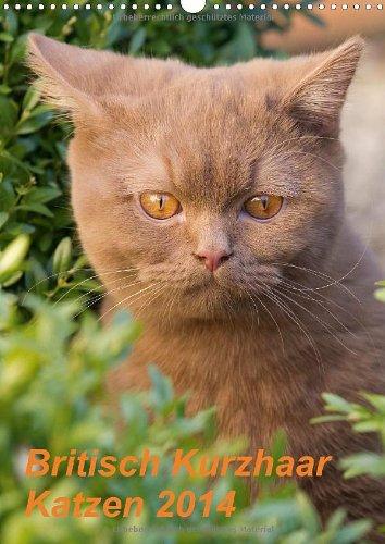 9783660385489: Britisch Kurzhaar Katzen 2014: Britisch Kurzhaar Katz A3 hoch