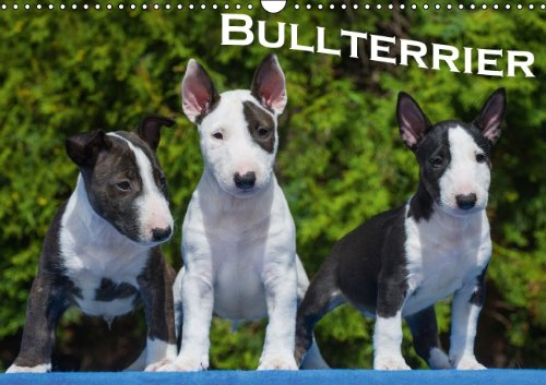 9783660388183: Bullterrier - Author: Bullterrier