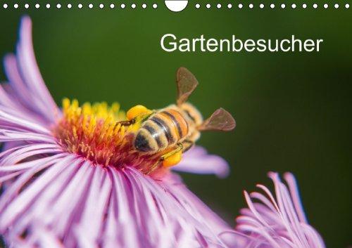 9783660395778: Gartenbesucher: Gartenbesucher A4 quer