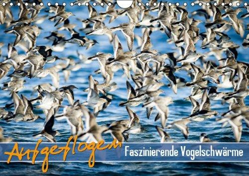 9783660398212: Aufgeflogen - Faszinierende Vogelschwärme: Aufgeflogen - Faszinie A4 quer