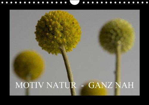 9783660408423: Motiv Natur - Ganz nah - Author: b.rit by