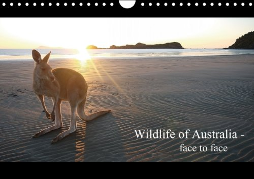 9783660421040: Wildlife of Australia - face to face / UK-Version: Wildlife of Austr A4 Landscape