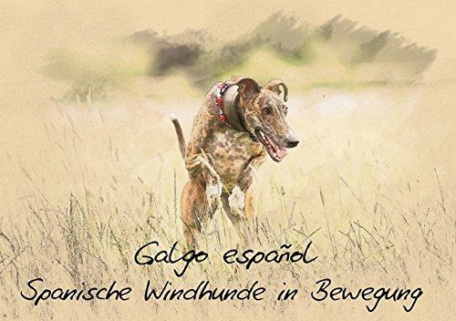 9783660436389: Galgo español - Spanische Windhunde in Bewegung (Tischaufsteller DIN A5 quer): Spanische Windhunde (Galgos) im kunstvollen Aquarell-Stil. Jedes ... Kunstwerk. (Tischaufsteller, 14 Seiten)