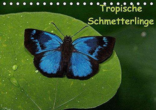 9783660468168: Tropische Schmetterlinge (Tischkalender immerwährend DIN A5 quer): Schmetterlinge aus den Tropen der ganzen Welt (Tischkalender, 14 Seiten)