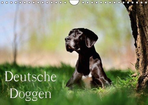 9783660485592: Deutsche Doggen / Geburtstagskalender (Wandkalender immerwährend DIN A4 quer): 13 wunderschöne Doggen-Motive für das ganze Jahr (Monatskalender, 14 Seiten)