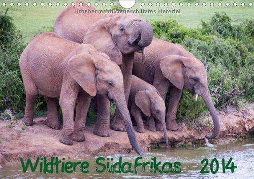 9783660517064: Wildtiere Südafrikas / Geburtstagskalender - Author: Beringer Robert