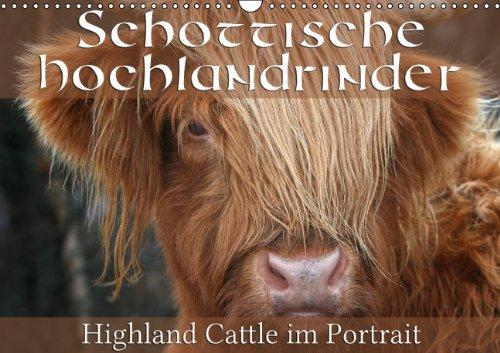 9783660558036: Schottische Hochlandrinder - Highland Cattle im Portrait - Author: Cross Martina