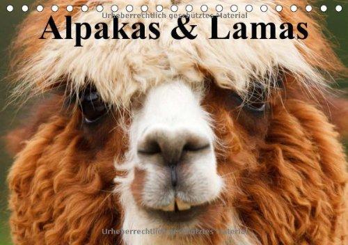 9783660562880: Alpakas & Lamas: Alpakas & Lamas A5 quer