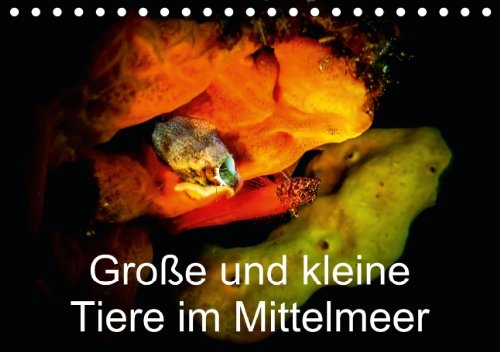 9783660576580: Große und kleine Tiere im Mittelmeer - Author: Hampe Gabi