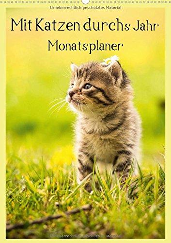 9783660599381: Mit Katzen Durchs Jahr / Planer (Wandk