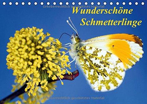 9783660603651: Wunderschã¶ne Schmetterlinge Tischkale