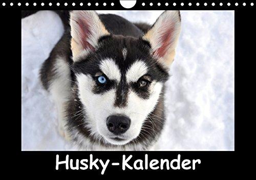 9783660642759: Husky-Kalender - Author: andiwolves