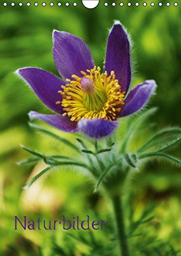 9783660648652: Naturbilder - Author: Tanja Riedel by