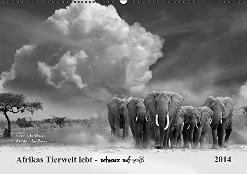 9783660666700: Afrikas Tierwelt Lebt Schwarz Auf Wei