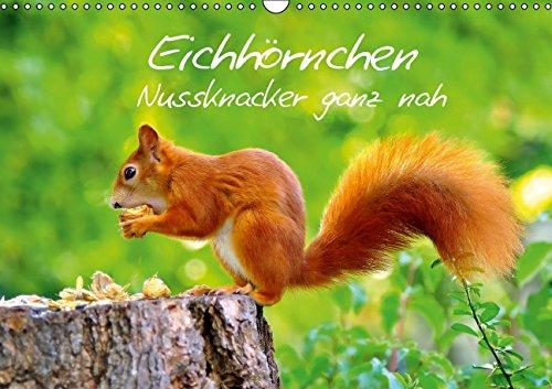 9783660668438: Eichhörnchen-Nussknacker ganz nah - Author: Jazbinszky Ivan