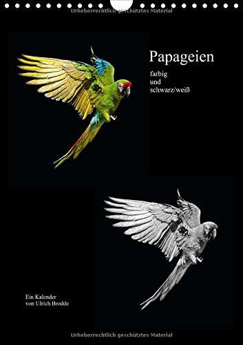 9783660672350: Papageien Farbig Und Schwarz Weiãÿ W