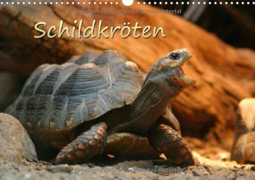 9783660733624: Schildkröten - Author: Mielewczyk Barbara