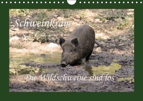 9783660762174: Schweinkram Die Wildschweine Sind Los