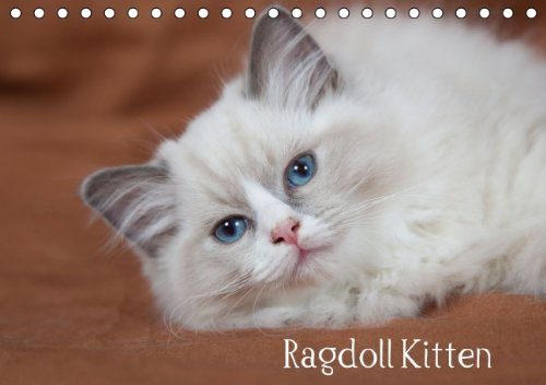 9783660808612: Ragdoll Kitten - Author: Verena Scholze Fotodesign