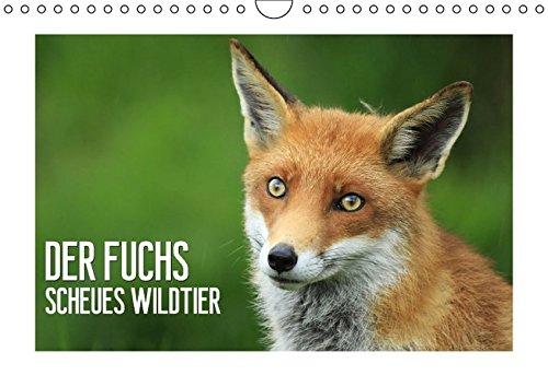 9783660818888: Der Fuchs - scheues Wildtier (Wandkalender 2015 DIN A4 quer): Ein Jahr im Leben der scheuen Füchse (Monatskalender, 14 Seiten)