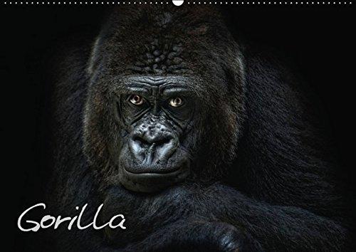 9783660827972: Gorilla Wandkalender 2015 Din A2 Quer