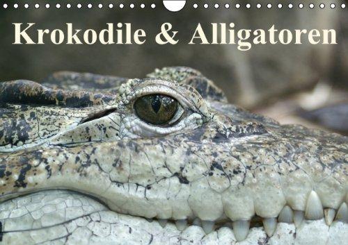 9783660833423: Krokodile Amp Alligatoren Wandkalend