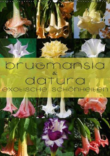 9783660852530: Brugmansia Amp Datura Exotische Sch
