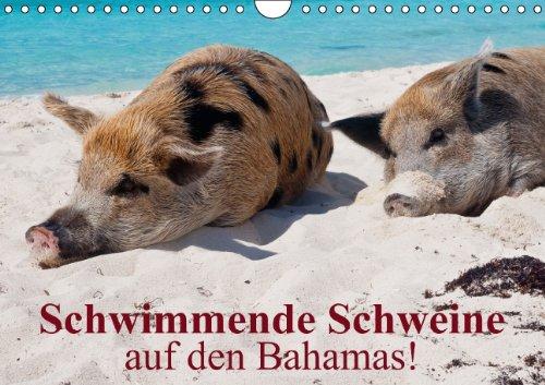9783660853964: Schwimmende Schweine auf den Bahamas!: Schwimmende Schweine a A4 quer