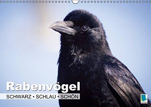 9783660873207: Rabenvã¶gel Schwarz Schlau Schã¶n