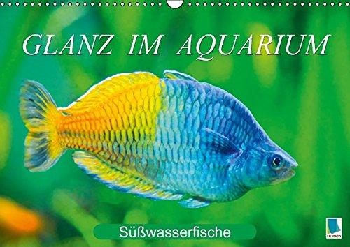9783660890976: Glanz Im Aquarium Sã Ãÿwasserfische W