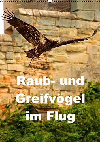9783660892185: Raub Und Greifvã¶gel Im Flug Wandkale