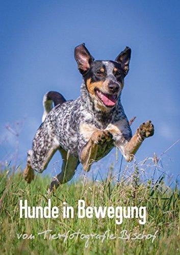9783660899528: Hunde in Bewegung - Das Posterbuch - von Tierfotografie Bischof (Posterbuch DIN A4 hoch): Hunde in dynamischen Bewegungsaufnahmen, das Posterbuch zum Kalender (Posterbuch, 14 Seiten)