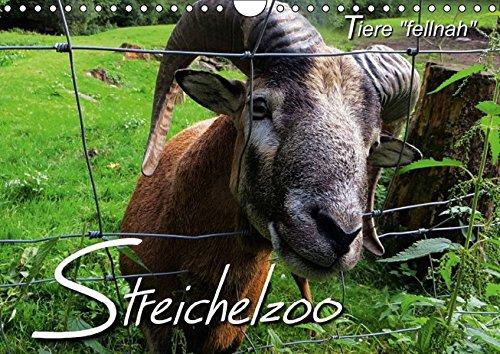 9783660947526: Streichelzoo Tiere Fellnah Wandkal
