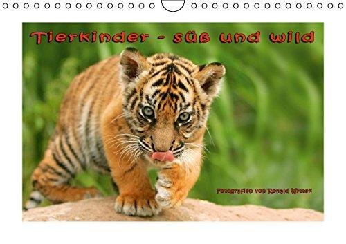 9783660967944: Tierkinder - süß und wild - Author: Wittek Ronald