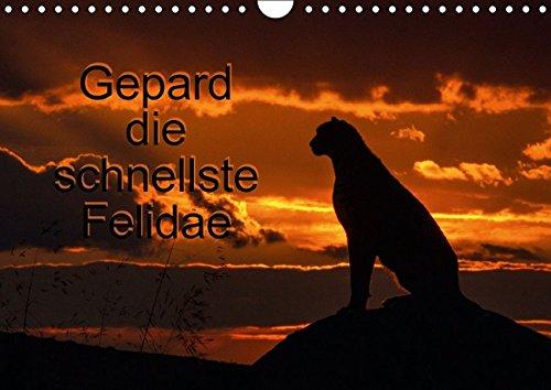 9783660969078: Gepard Die Schnellste Felidae Wandkale