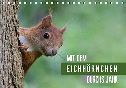 9783660988239: Mit Dem Eichhã¶rnchen Durchs Jahr Tisc