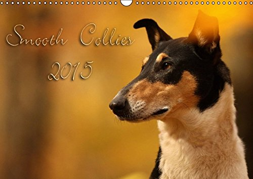 9783660988451: Smooth Collies 2015 Wandkalender 2015