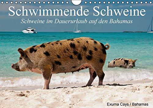 9783664035328: Schwimmende Schweine / Geburtstagskalender (Wandkalender immerwährend DIN A4 quer): Glückliche Schweine im Dauerurlaub auf den Bahamas (Geburtstagskalender, 14 Seiten)