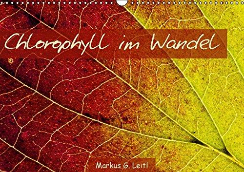 9783664081677: Chlorophyll im Wandel (Wandkalender 2015 DIN A3 quer): Blattstrukturen diverser Laubbäume, Sträucher und Weinreben während der Herbstverfärbung (Monatskalender, 14 Seiten)