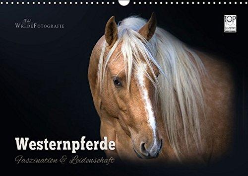 9783664127290: Westernpferde - Faszination und Leidenschaft (Wandkalender 2016 DIN A3 quer): American Quarter Horses... 13 wundervolle Bilder dieser beliebten Pferderasse (Monatskalender, 14 Seiten)