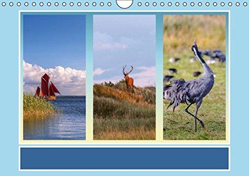 9783664137169: Fischland-Darß-Zingst (Wandkalender 2016 DIN A4 quer): Impressionen einer Halbinsel (Monatskalender, 14 Seiten)
