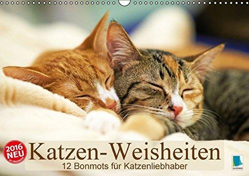 9783664143948: Katzen-Weisheiten: 12 Bonmots für Katzenliebhaber - Wandkalender 2016